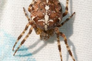 Spider Macro_1.JPG